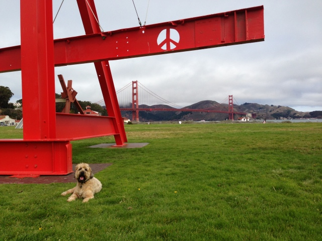 Crissy Field is the temporary site of several very large creations by Mark di Survero including this one that was last in San Francisco in 1972.