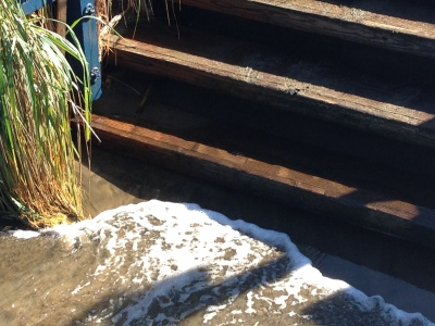 Bay water lapping at the steps down to the Dolphin Club beach.